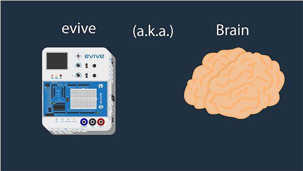evive AKA Brain